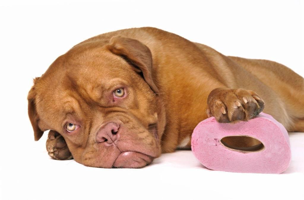 Жидкий стул у собаки: основные причины и провоцирующие факторы