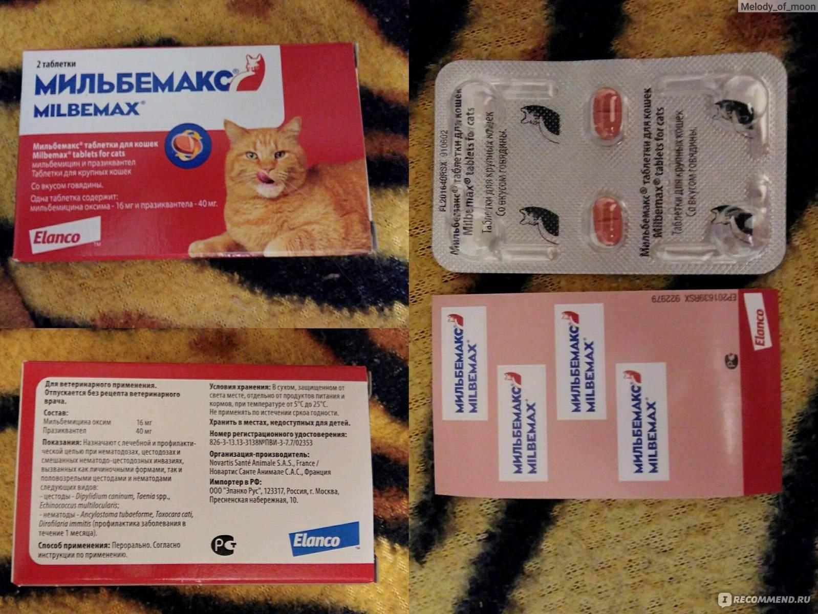 Антигельминтный препарат мильбемакс для котят, кошек и собак: состав и инструкция по применению, отзывы