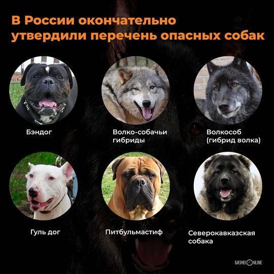 Опасные породы: рейтинг самых злых собак в мире с описаниями и фотографиями