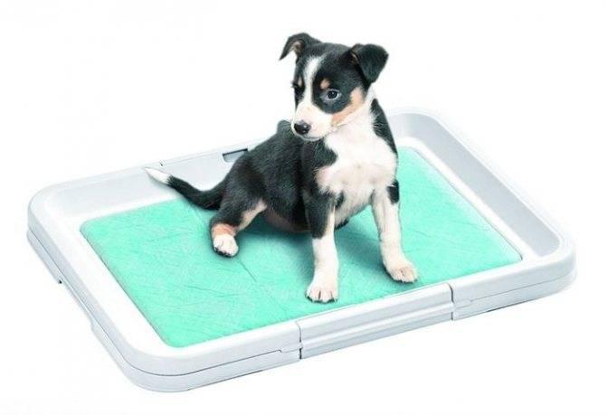 Как приучить собаку ходить к пеленке?