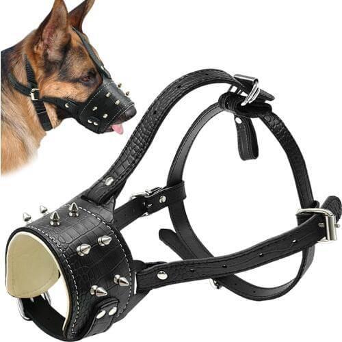 Как выбрать шлейку и ошейник для хаски: что лучше для собаки и как правильно подобрать аксессуар