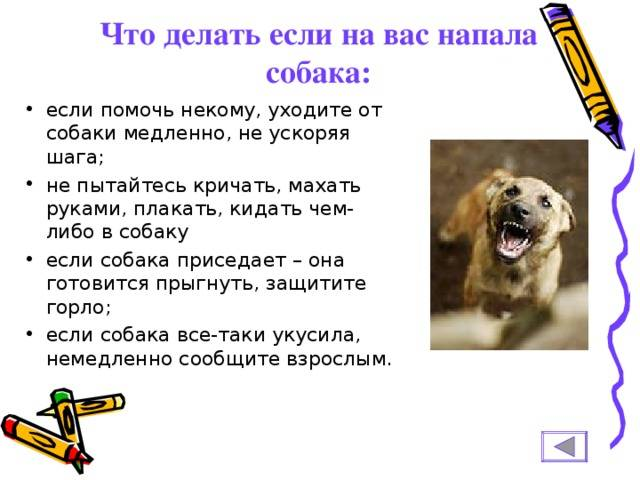 Что делать если нападает собака: как предотвратить, как себя вести