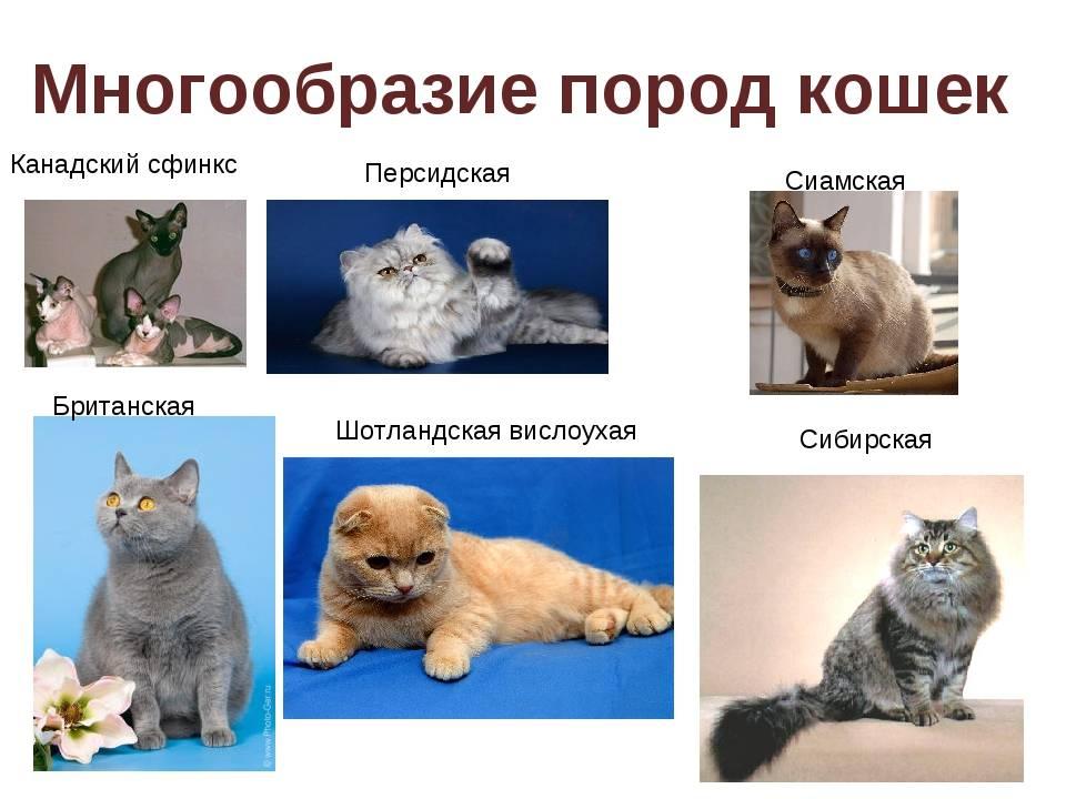 Какие породы кошек являются гипоаллергенными (антиаллергенными); необходимый уход за ними