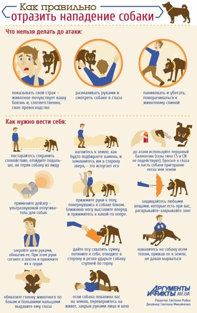 8 ошибок в поведении хозяев, которые вызывают стресс у их собак
