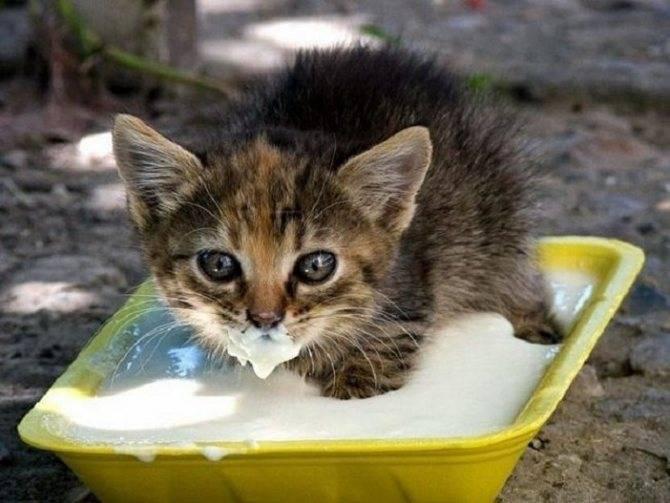 Как поймать кота? как своими руками сделать ловушку для кота?