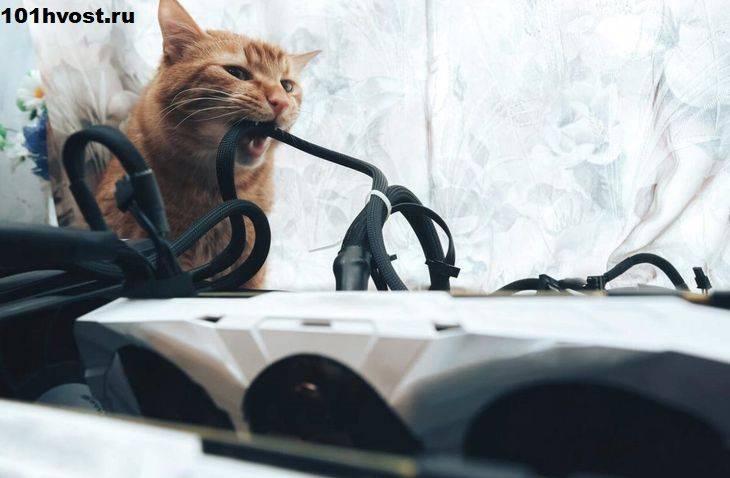 Как отучить кошку грызть провода: 9 эффективных способов