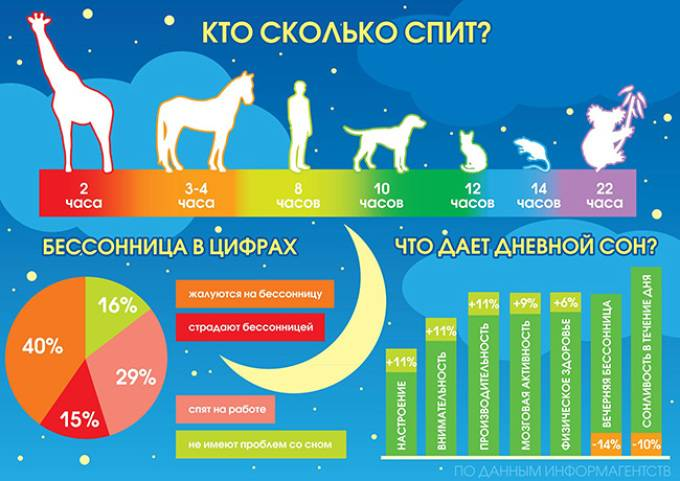 Сколько собаки спят часов в сутки: почему много спят