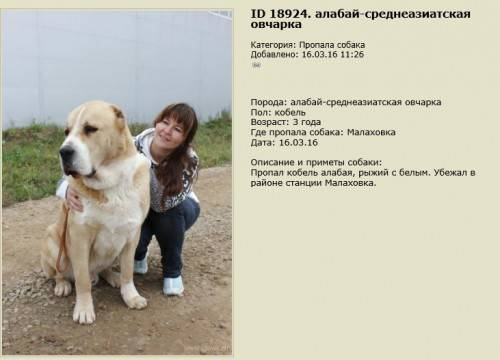 Основные характеристики алабаев. отличительные черты данной породы собак