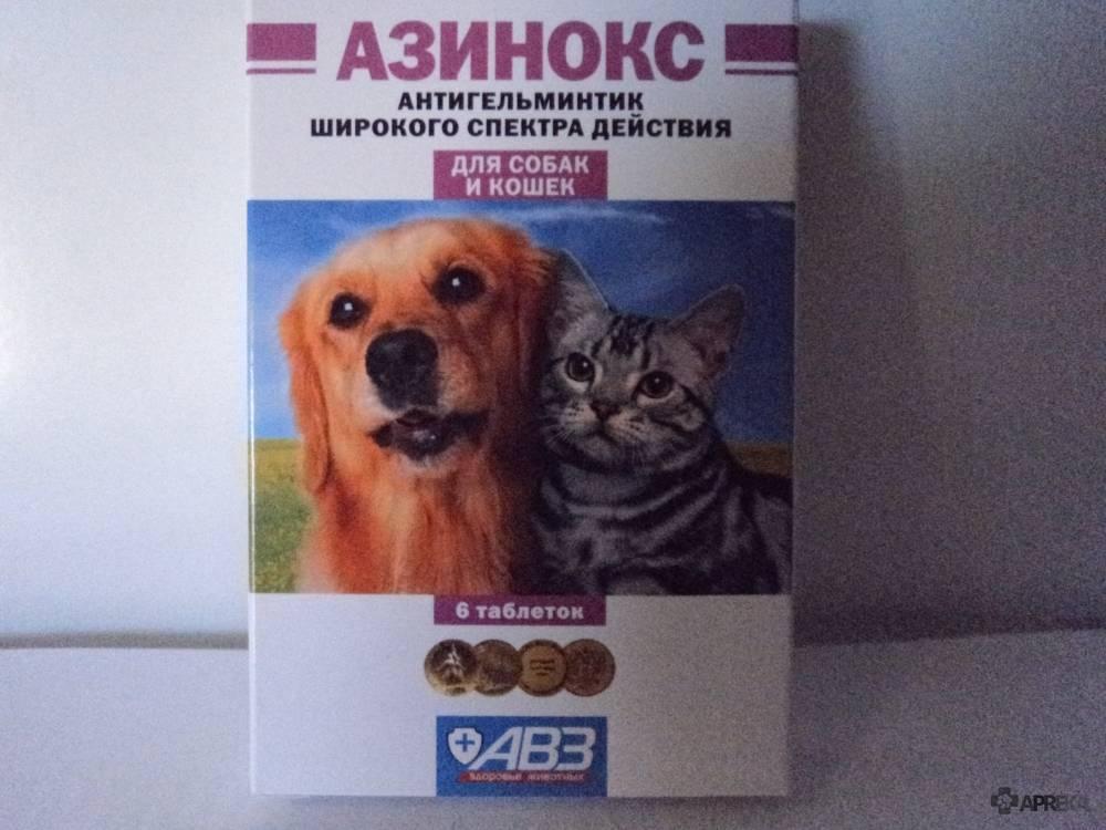 Азикан для кошек и собак | инструкция по применению азикана в ветеринарии