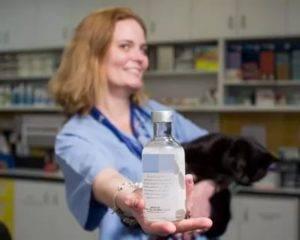 Подробно об отравлениях у кошек: симптомы, признаки и лечение в домашних условиях, отравление крысиным ядом, чем лечить