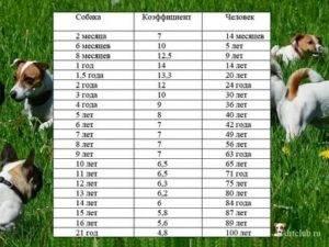 Как определить возраст собаки? смотрите таблицу