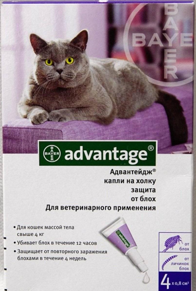 Адвантейдж: инструкция по применению для кошек