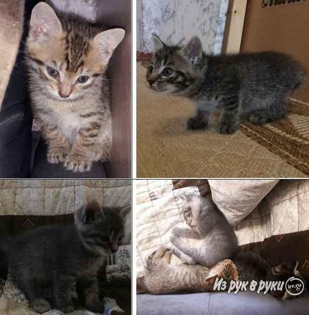 Куда отдать домашнюю или бездомную кошку: в приют или на передержку
