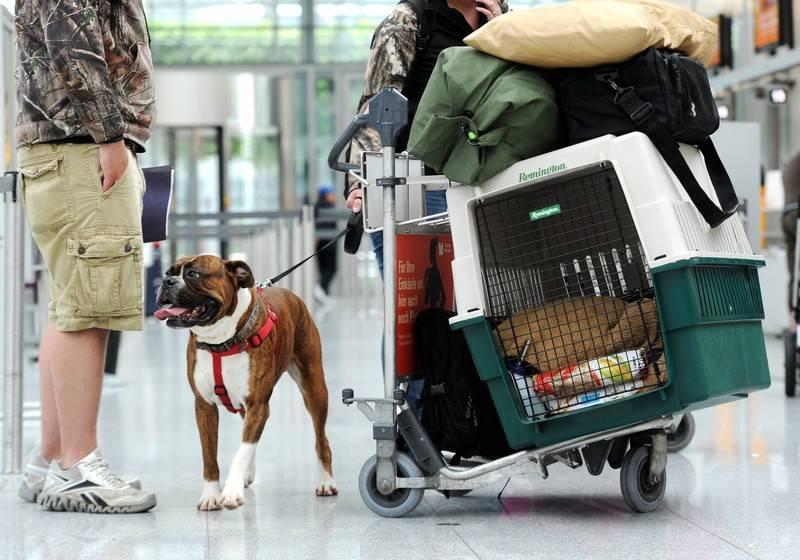 Где оставить собаку на время отъезда – или взять с собой? перевозка животных, передержка, гостиница для собак и кошек