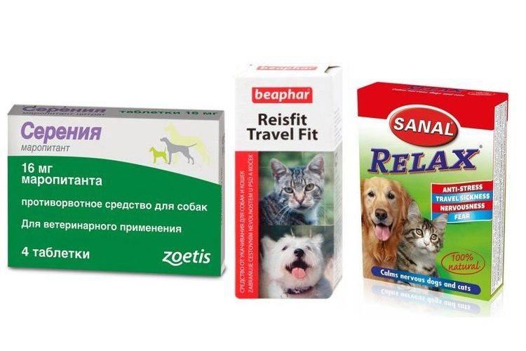 Собаку укачивает в машине: что делать   средства, таблетки, что дать собаке