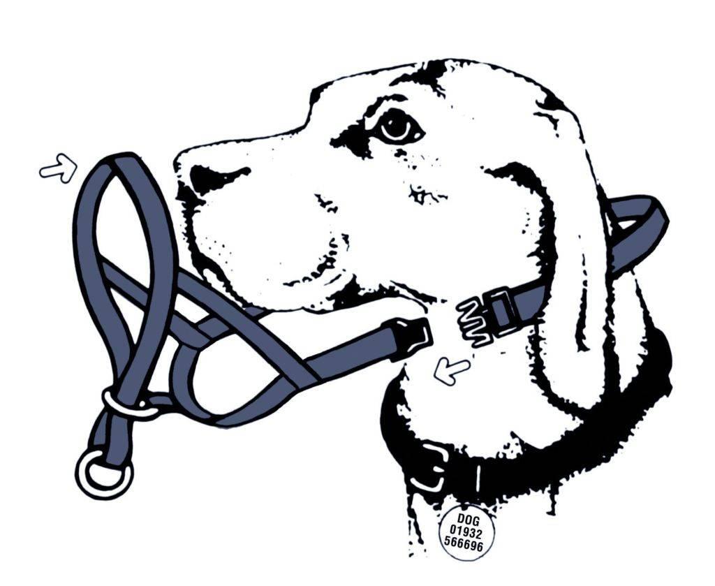 Недоуздок для собак: для чего нужен, как подобрать размер и пользоваться, как сшить своими руками