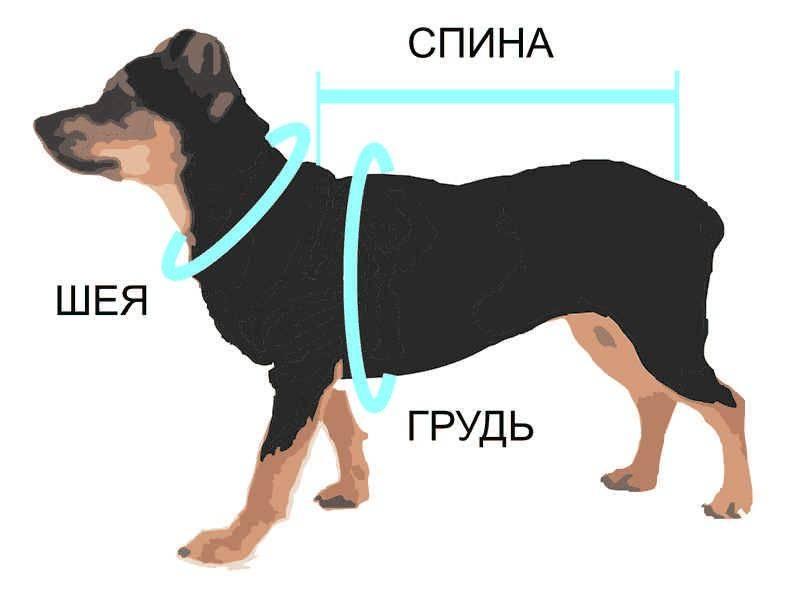 Как снимать мерки с собаки для комбинезона?