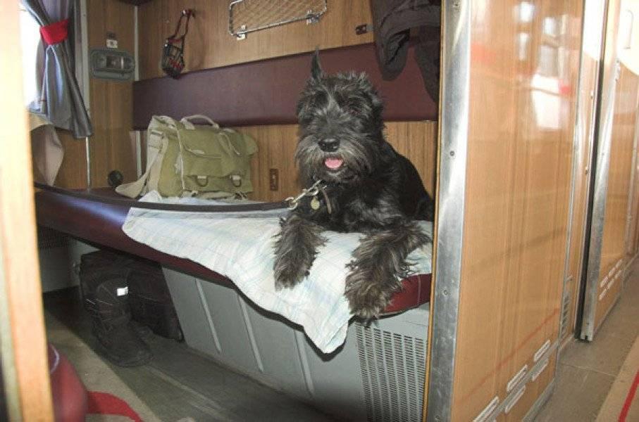 Как перевозить собаку в поезде - правила ржд, необходимые документы