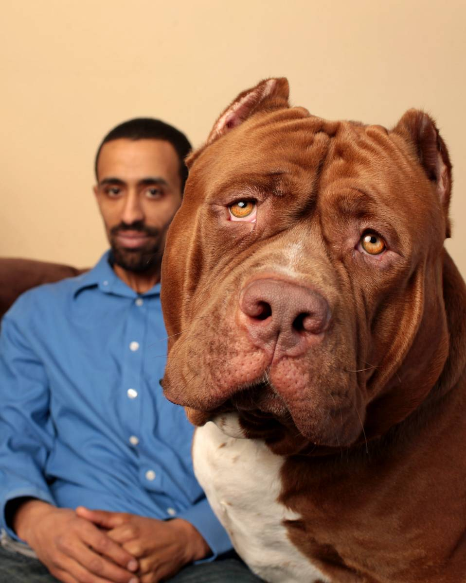 Спокойные породы собак для квартиры и дома: маленькие, небольшие, средние   petguru