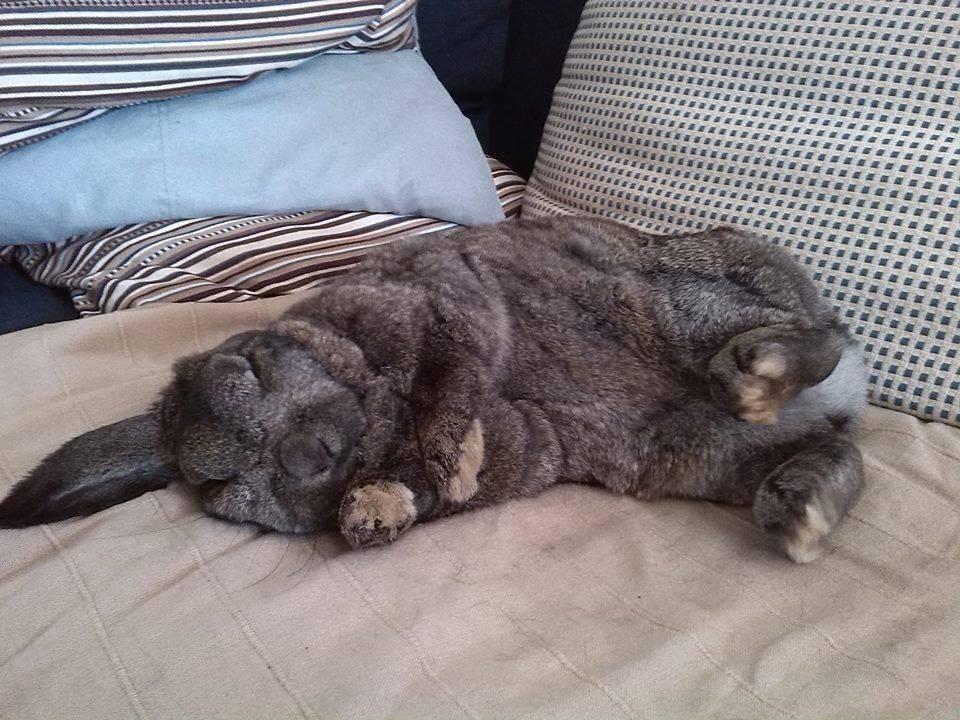 Спят ли кролики ночью? декоративные кролики, как они спят и сколько живут.