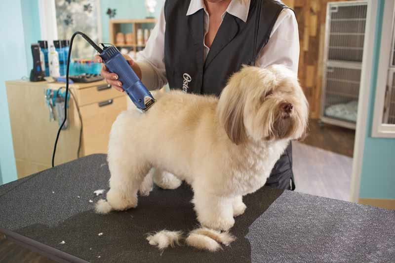 Какой машинкой можно стричь собак, стрижка собак обычной машинкой для людей