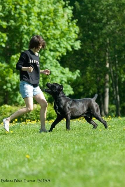 Щенки кане корсо: как выглядят на фото собаки в 1, 3, 4, 6, 7 месяцев и каким должно быть правильное развитие животного