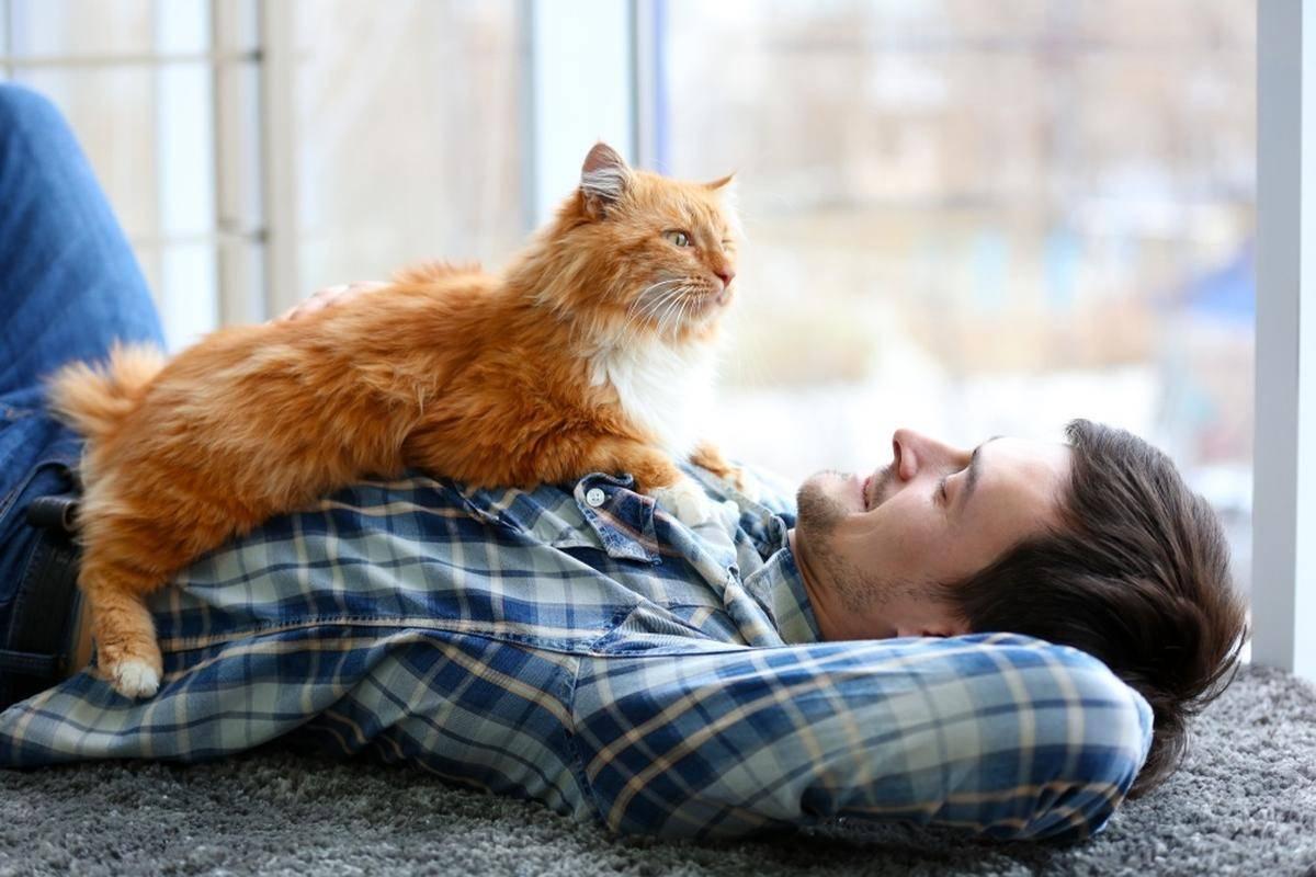 Почему кошки мурлыкают | «зачем и почему»