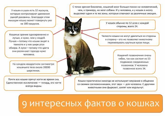 Холка у кошки: где находится и что это такое
