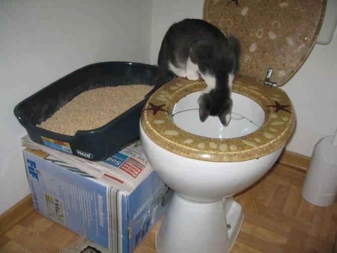 Причины если коты прячутся в темных местах и не едят: что это означает