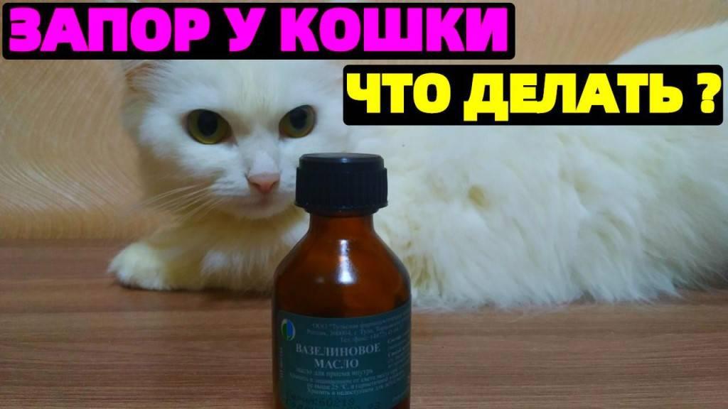 У кошки запор чем можно помочь в домашних условиях: как лечить и чем кормить, что дать от запора, поможет ли вазелиновое масло и дюфалак