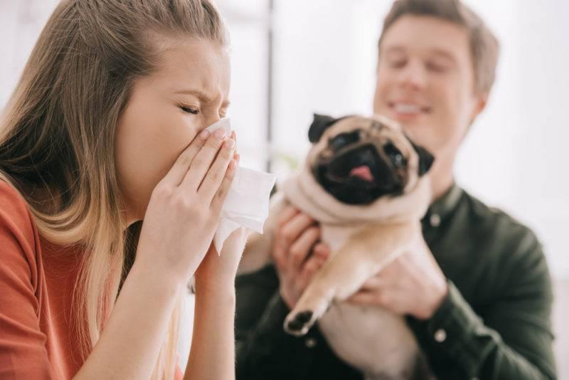 Почему той терьер постоянно чихает. почему собаки начинают фыркать и чихать, причины и как лечить