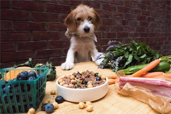 Сколько дней собака может прожить без еды и воды? сколько дней без еды и воды может... - животные и растения - вопросы и ответы