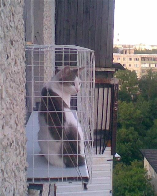 Кошачий балкончик: балкон для кошек на окно, ограждение, выгул, вольер