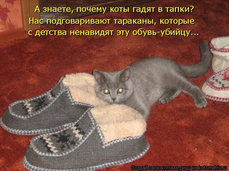 Как научить кота командам? ? апорт, дай лапу, приносить игрушку и др. ?