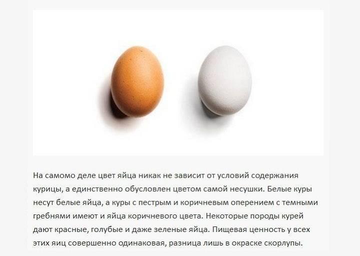 Можно ли щенку давать вареное яйцо?