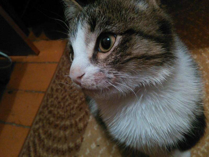 Зачем коту усы, и что будет, если их обрезать - досуг - животные на joinfo.ua