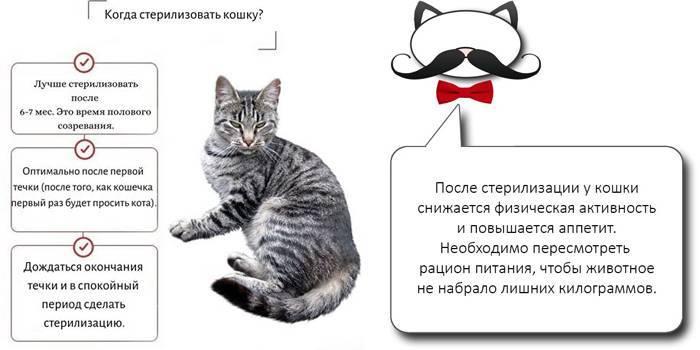 Как понять, что кот просит кошку: признаки и проявления
