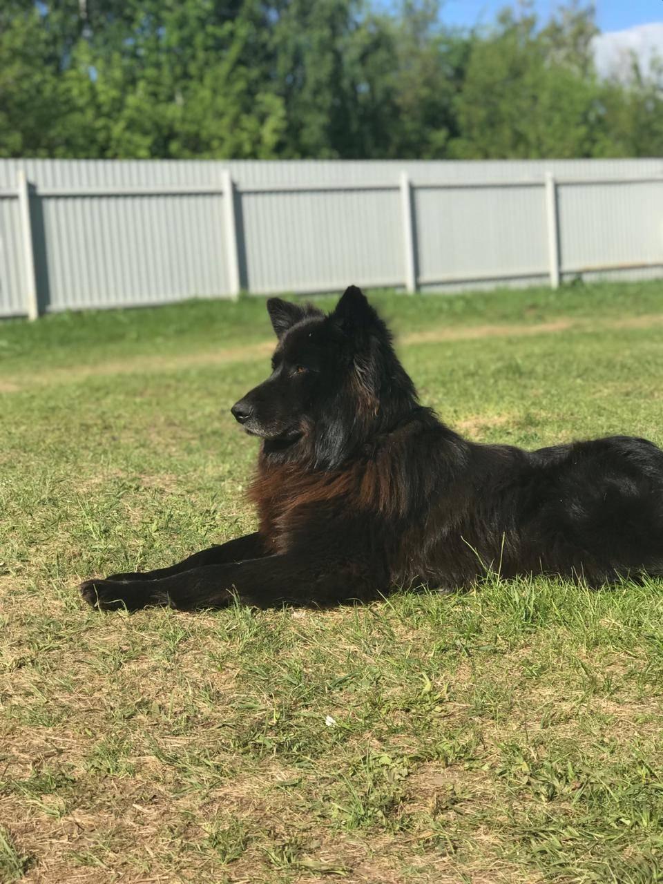 Лучшие охранные породы собак | для частного дома, для человека