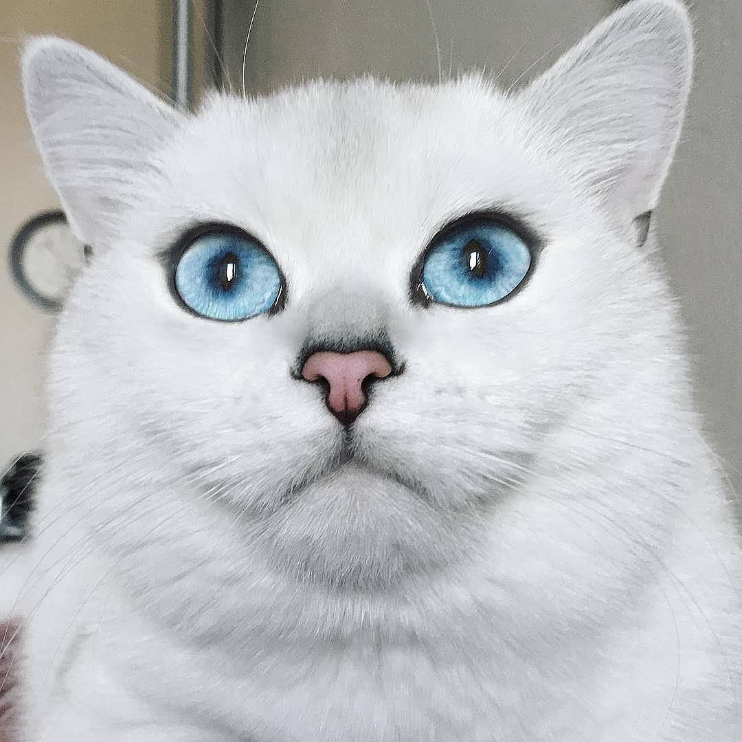 Описание белого кота коби с красивыми глазами
