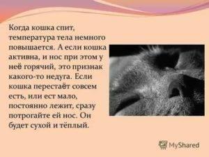 Влажный и теплый нос у собаки. горячий и сухой нос у собаки: причины. сухой или горячий, теплый нос у собаки, когда она спит во время сна что это значит и почему
