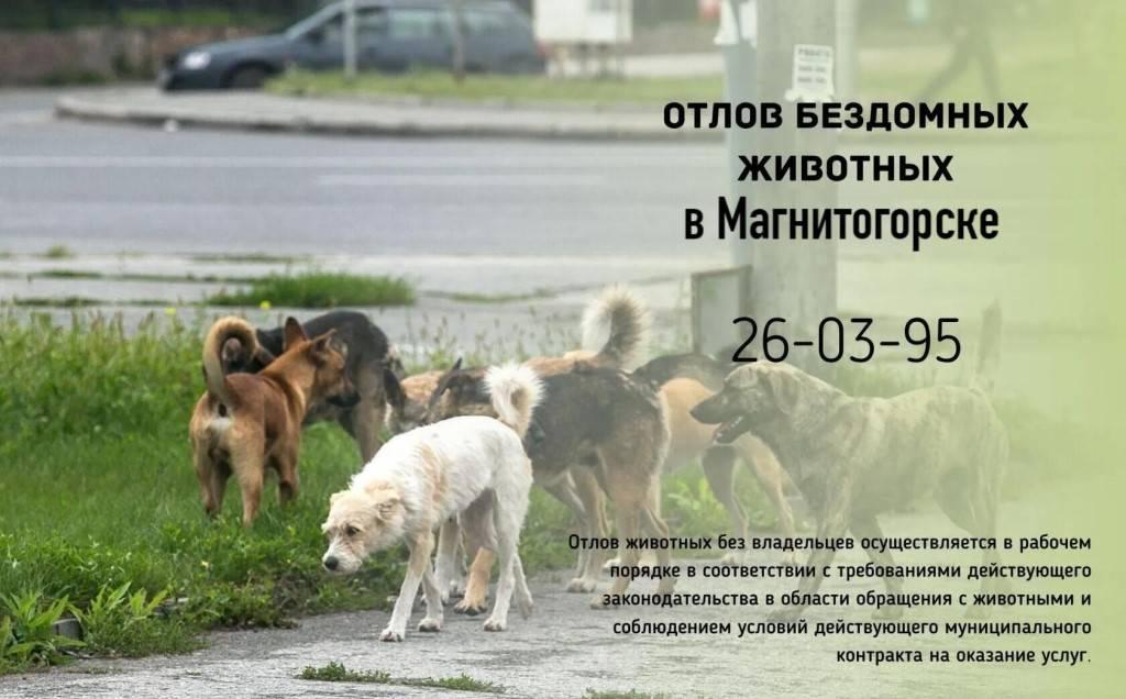 Бродячие собаки: куда обращаться по отлову бродячих собак?