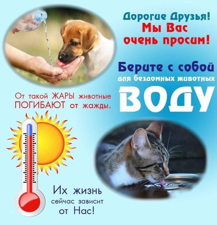 Здоровье собаки летом: как подготовить любимца к жаре