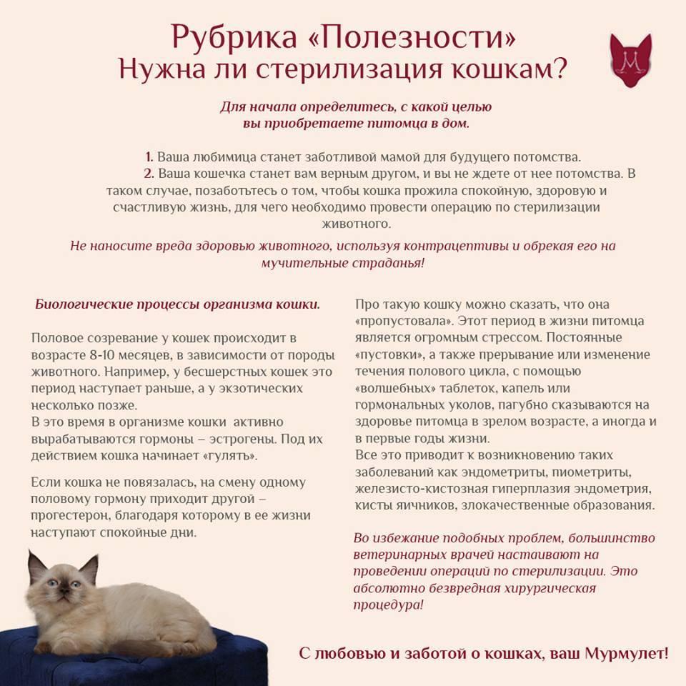 """Половое созревание у котов и кошек. ветеринарная клиника """"зоостатус"""""""