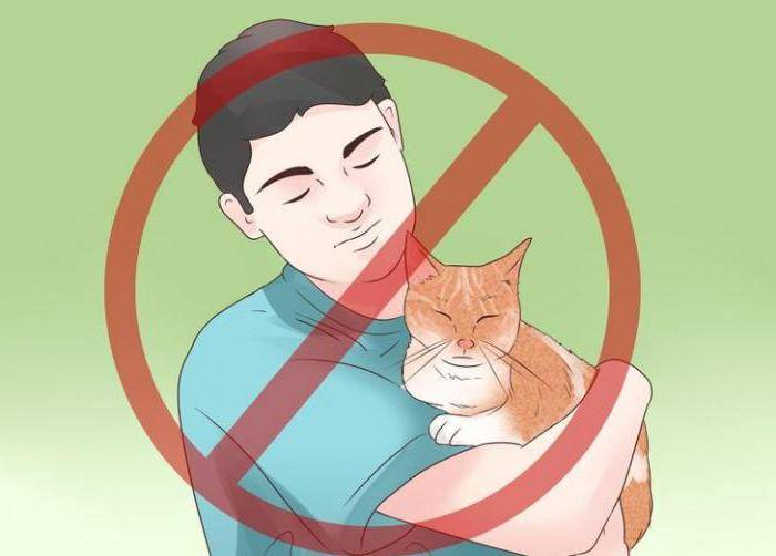 Лечение эпилепсии у кошек - муркин дом