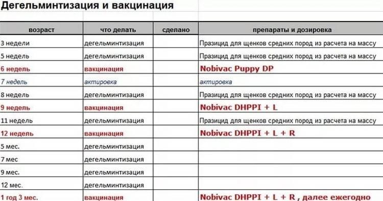Прививки собакам по возрасту: таблица и основные правила вакцинаций щенков до года