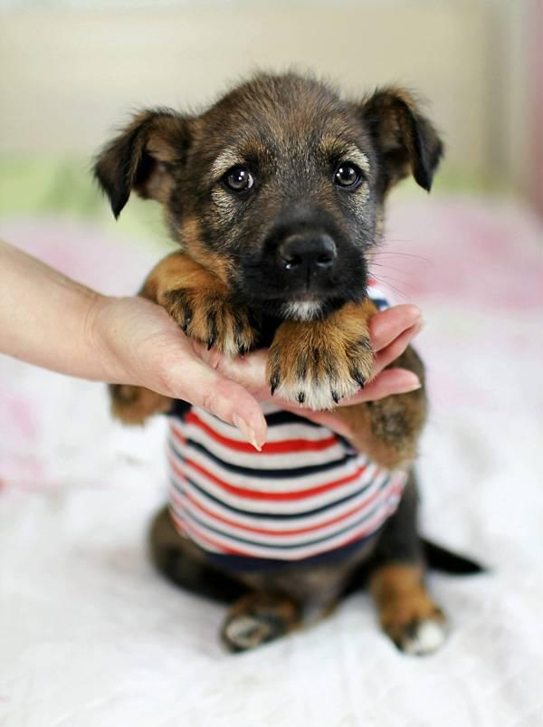 Как придумать кличку для собаки-мальчика и собаки-девочки