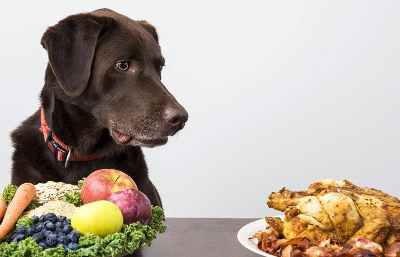 Чем можно кормить собаку