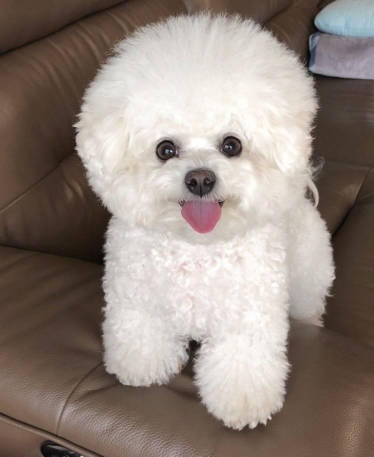 Гипоаллергенные собаки: топ-20 пород с описанием и фото