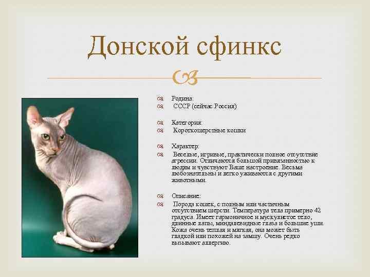 Сфинкс кошка: характер, правила ухода и возможные болезни