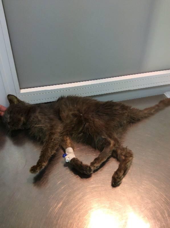 Обезвоживание у кота: лечение в домашних условиях - медицина